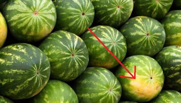 Na co zwracać uwagę, żeby wybrać dojrzałego i słodkiego arbuza.